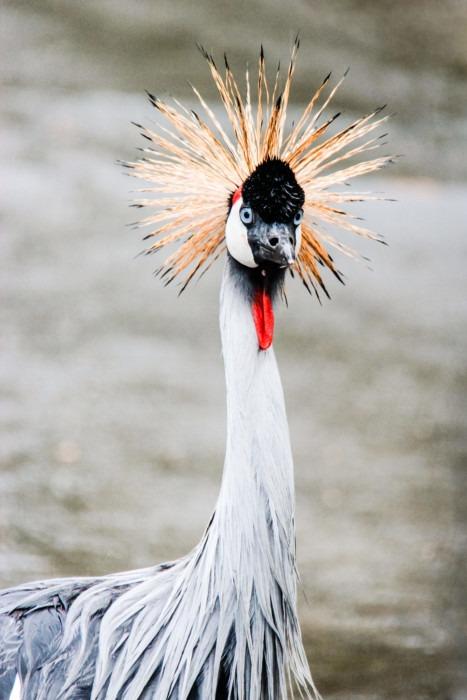 Vogel bunt Indonesien