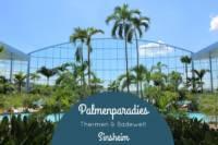 Naehfrosch-Palmenparadies