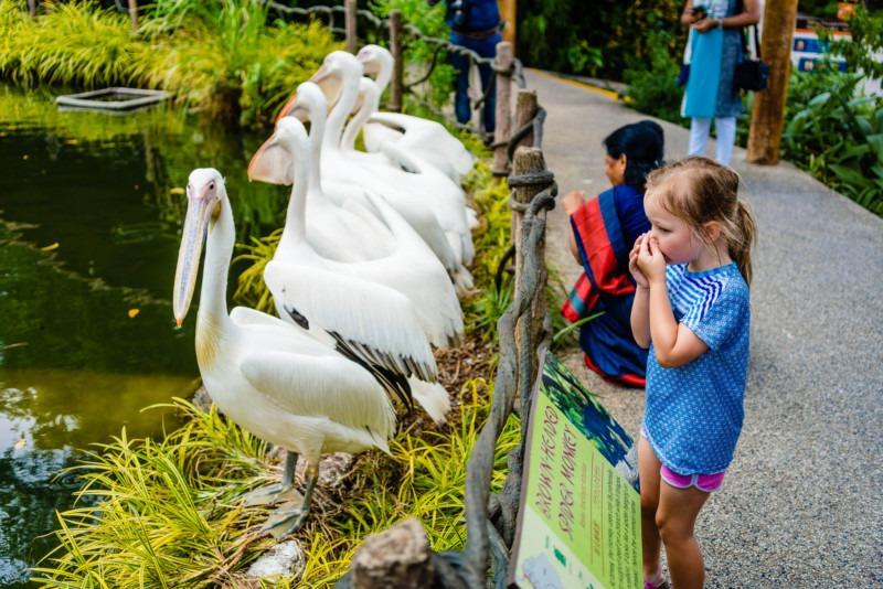 Singapore Zoo 004