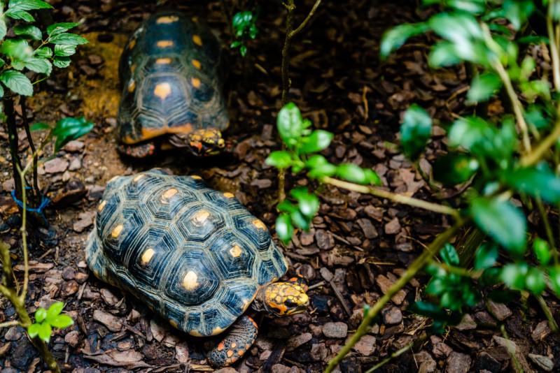 Singapore Zoo 030