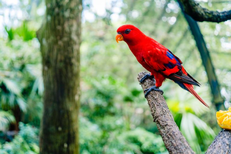Singapore Zoo 045