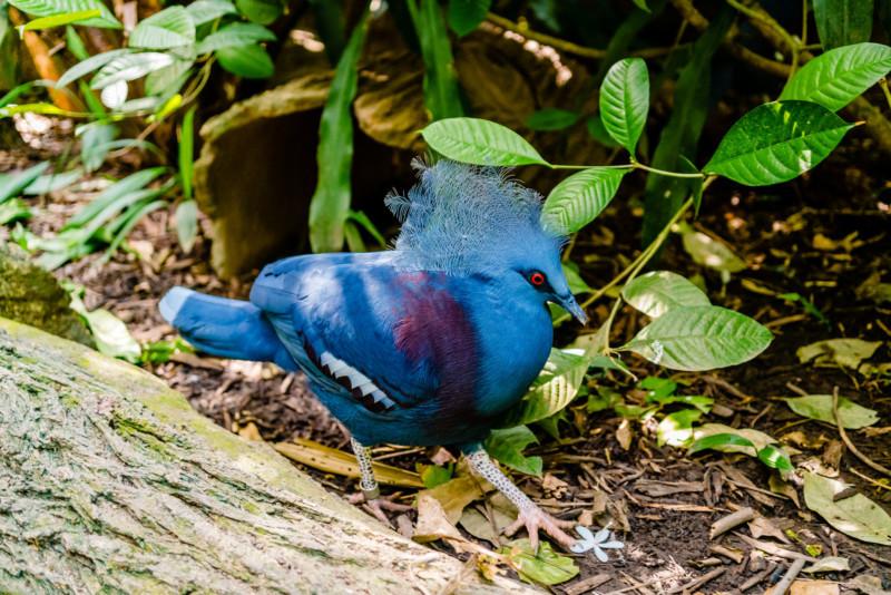 Singapore Zoo 047