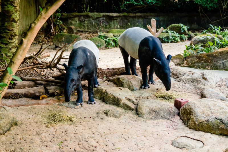Singapore Zoo 059