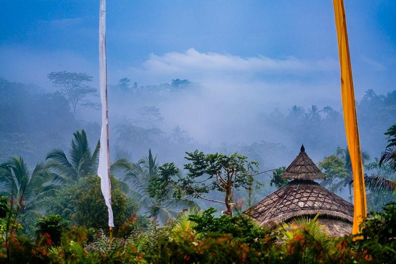 Tropischer Regenwald auf Bali