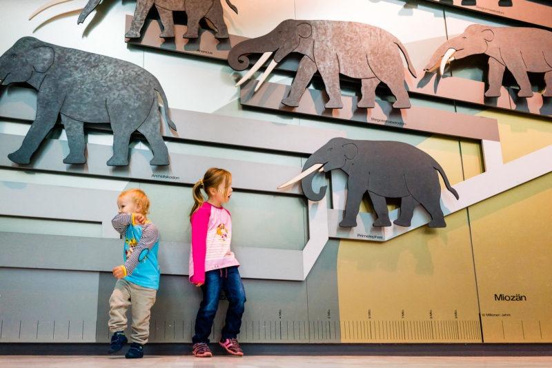 Senckenberg Museum mit Kindern 081