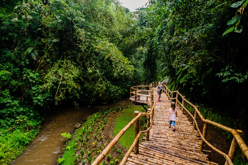 Regenwald Ubud Bali