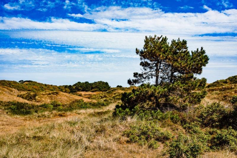 Nordsee Strände: Die Landschaft auf Spiekeroog ist einmalig